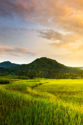 Beautiful morning Sky Landscape Cloud - Sky Environment Plant Nature Land Grass Beauty In Nature Sunset Field Tranquility No People Rural Scene Tranquil Scene Positive Emotion Scenics - Nature Growth Freedom Green Color Yogyakarta INDONESIA Hill Farm Rice Paddy Morning Tropical