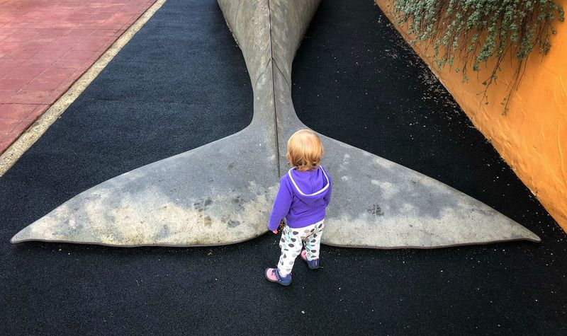 Ophelia meets Sandy the Whale Whale Fluke Whale Tail Whale Big And Small Exploring Learning Toddler  Streamzoofamily Childhood One Person Day Rear View Full Length Children Only Child