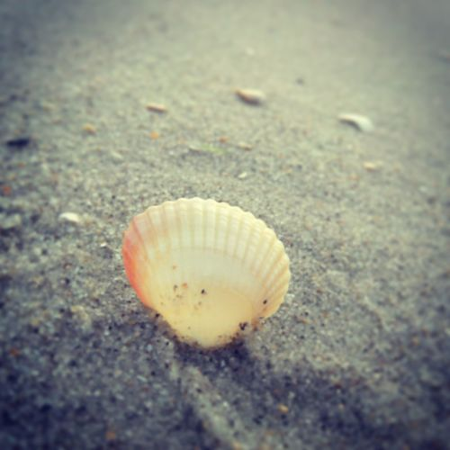 shell on the sand)