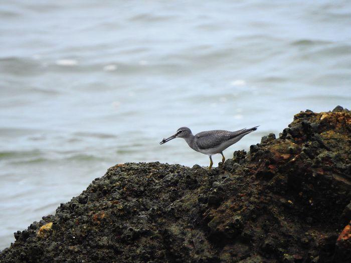Bird on rock against sea