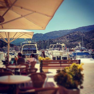 Life can be tough. But I'm tougher. 😎🌴 Vacationtweet Lifeisgood Portdesóller Mallorca Baleares Spain