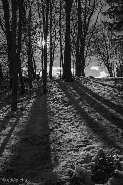 Wintery forest shadows Fujifilm_xseries Fujifilm Monochrome Blackandwhite Tree Plant Land Forest Nature Tranquility Trunk Tree Trunk No People Growth Beauty In Nature Tranquil Scene Day Scenics - Nature Outdoors Sunlight Bare Tree Field Winter Non-urban Scene