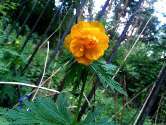 EyeEm Nature Lover EyeEm Flower Flowers Orange