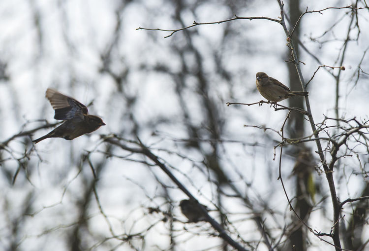 Birds Vertebrate Animals In The Wild Bird Animal Themes Animal Animal Wildlife Tree Branch Perching Plant Group Of Animals Two Animals No People Nature Focus On Foreground Low Angle View Day Selective Focus Bare Tree Outdoors