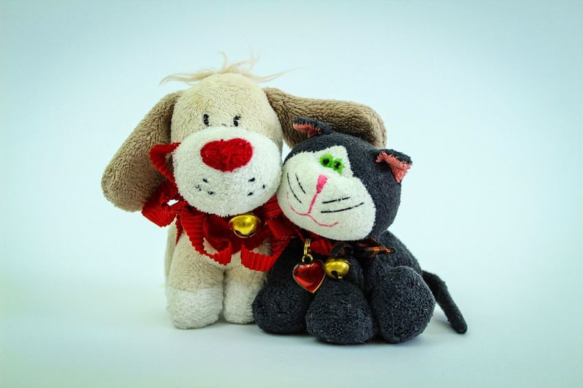 Teddy Bear Stuffed Toy Toy Toy Animal No People Hanging Softness Close-up Childhood Day Cat Dog Frommetoyou Love Valentine's Day  Gift Withlove Togetherness