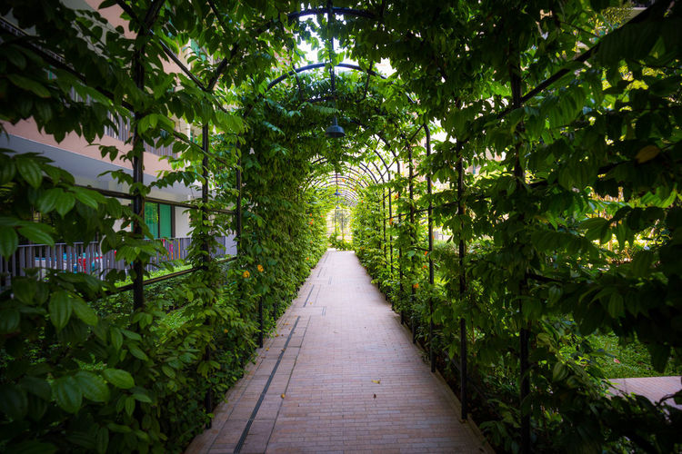 Green Tunnel Beauty In Nature Day Green Color Green Tunnel Growth Leaf Nature No People Outdoors Plant Plants The Way Forward Urban Plants The Great Outdoors - 2018 EyeEm Awards #urbanana: The Urban Playground