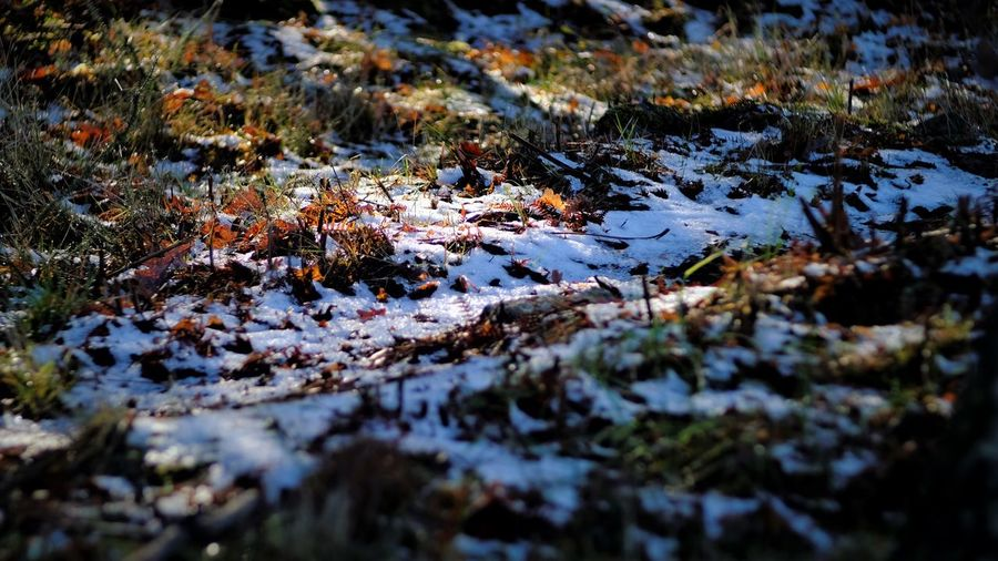 frozen ground Light Autumn Beauty In Nature Close-up Day Ground Leaf Lichen Moss Nature No People Outdoors Puddle Tranquility Water