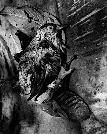 Tormenta Bird Tormenta Self Perspective Dead Close-up