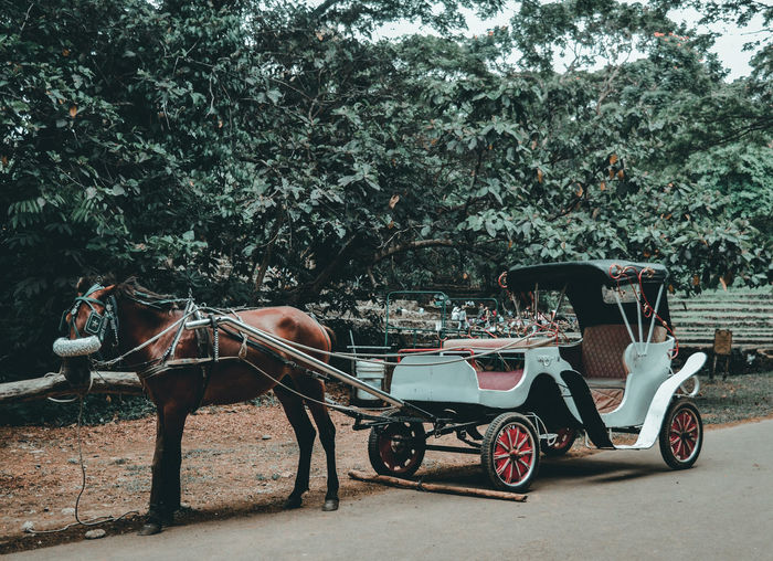 View of horse cart