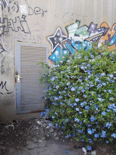 Flower Day Weathered Fragility No People Dirty Surface Level Painted Image Graffiti Art Graffiti Wall Graffiti The World Graffitiworldwide Green Color Blossom In Bloom Weathered Freshness Wall - Building Feature Outdoors Man Made Object Creativity