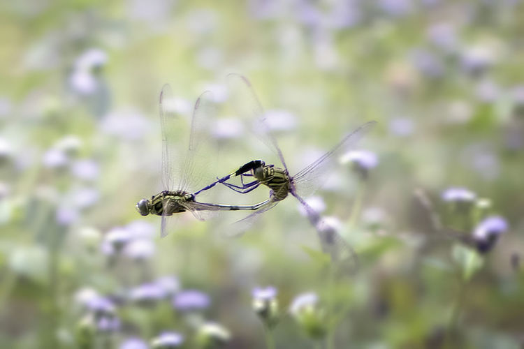 Flying Mating