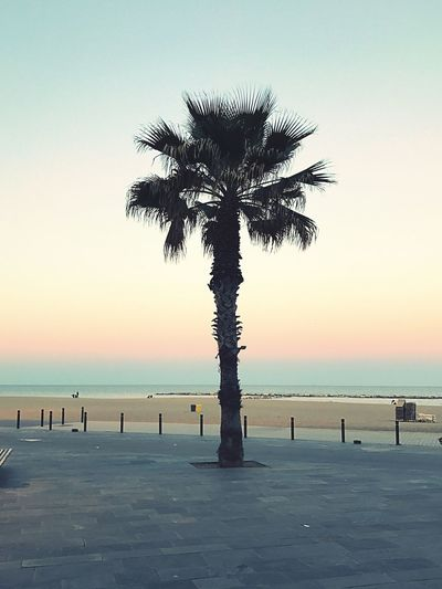 Sunset Sea Beauty In Nature Scenics Tranquility Nature Palm Tree Tree Tranquil Scene Beach Silhouette Horizon Over Water Outdoors Sky Water Tree Trunk Clear Sky No People Day