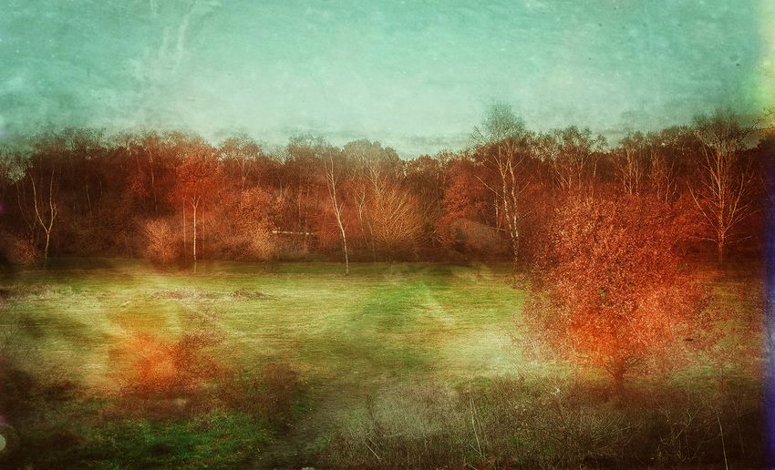 Digital composite image of trees on field against sky