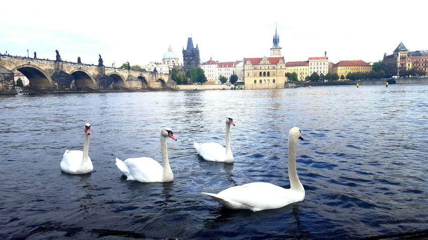 Bird River Travel Destinations City Outdoors Bridge - Man Made Structure Prague Chezh Republuc