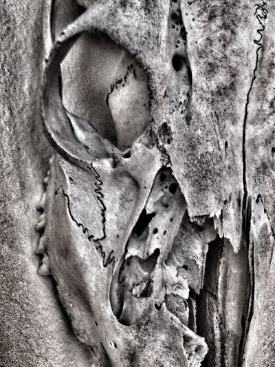 Detailsofdecay Death & Decay Skullporn Beauty Of Decay