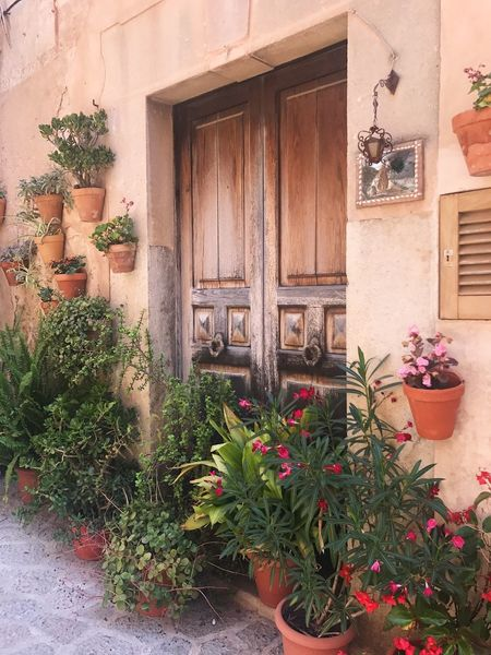Plant Potted Plant Door Architecture Growth Outdoors Flower Building Exterior Built Structure Day No People Nature Entry Window Box Valdemossa Mallorca Travel City Life City On The Road Traveling Hot Day Light Cityscape Beautiful
