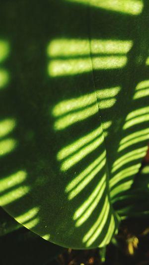 Green Green Color Sun Sun Light Sun Lights Leaf Green Leaves Green Leaf Nature Orchidee Orchidea Orchidea Leaf Light Lights HTC HTC_photography Htcphotography HtcPhoneOgraphy HTCDesireEye Izmir Turkey Turkey ızmir Photograph Light Stairs