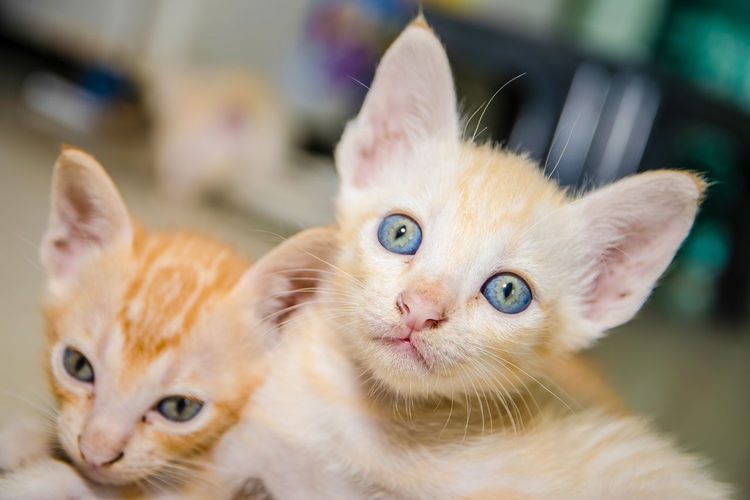 Close-Up Of Kittens At Home
