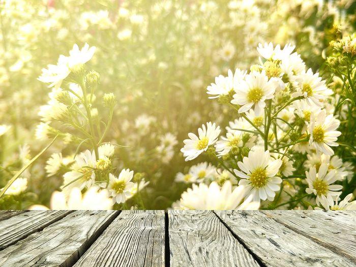 Beautiful white flowers in bloom