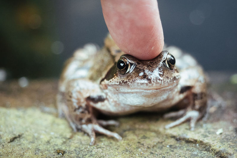 Close-Up Of Finger Touching Frog
