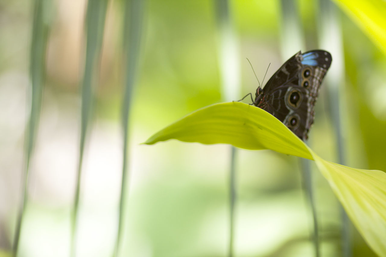one animal, animal themes, animals in the wild, insect, butterfly - insect, animal wildlife, green color, animal wing, nature, no people, day, outdoors, butterfly, wildlife, leaf, plant, close-up, focus on foreground, growth, beauty in nature, perching, fragility