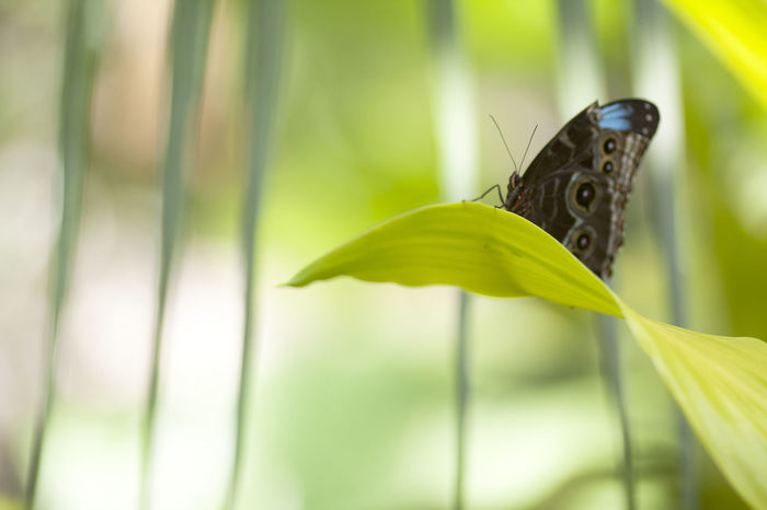 Animal Animal Themes Animal Wildlife Animal Wing Animals In The Wild Beauty In Nature Blade Of Grass Butterfly Butterfly - Insect Close-up Day Focus On Foreground Green Color Growth Insect Invertebrate Leaf Nature No People One Animal Outdoors Plant Plant Part