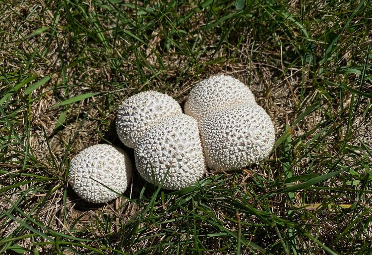 High angle view of mushroom in field