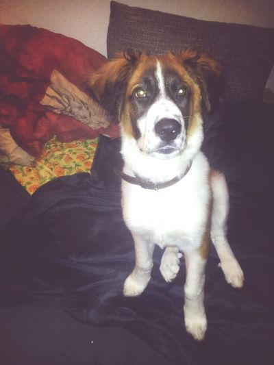 My Baby Dog :) Sweet Like And Follow Me