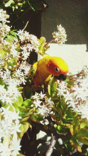 Sunconure Bird Aratinga Flowers,Plants & Garden