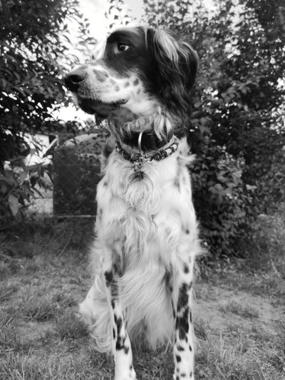 Wesley ❤️ setter anglais Setter EyeEmNewHere englishsetter dog Dogs dog love Dogs of EyeEm dogslife dog❤ doglover DogLove dog of the day dogmodel dog days Beliebte Fotos black and white monochrome monochrome photography Beliebte Fotos EyeEm Premium Collection Premium Collection Premium EyeEm Masterclass Setter Anglais Setter EyeEmNewHere Englishsetter Dog Dogs Dog Love Dogs Of EyeEm Dogslife Dog❤ Doglover DogLove Dog Of The Day Dogmodel Dog Days Black And White Monochrome Monochrome _ Collection Monochrome_life Monoart Monocrome Tree Pets Dog Grass