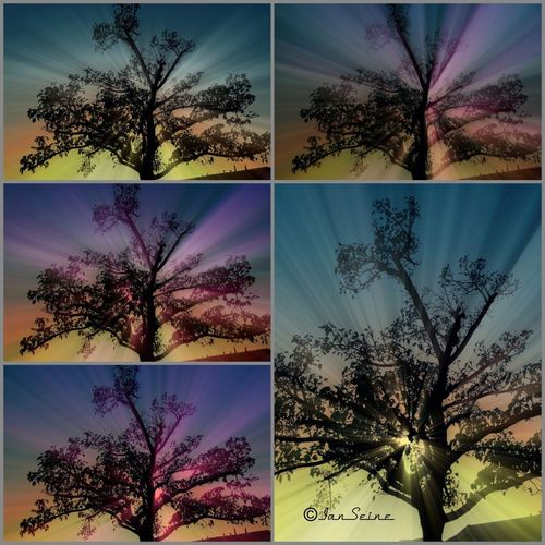 """A little show and tell here. These were all taken with a no lens filtering. I then added different concepts to each. So here is the collage of my """"finalists"""" Collage Water_collection For The Love Of Trees ~ Landscape_Collection"""