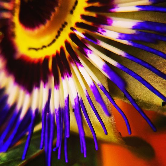 Flower Purple Close-up Flower Head Beauty In Nature Macro_collection Macro Photography