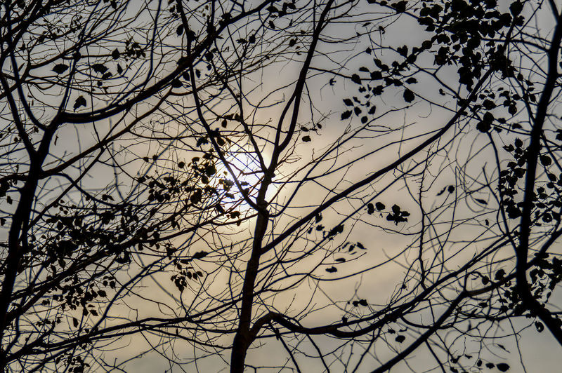 Tree Low Angle View Nature Branch Beauty In Nature Sky No People Outdoors Silhouette Growth Day Branches And Sky Silhouette Of Branches Tranquility Solitude And Silence Sunlight