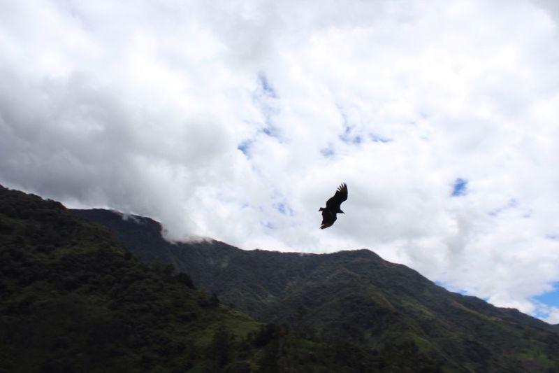 Sin Filtros Bird Flying Mountain Sky