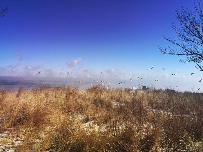 Birds on the