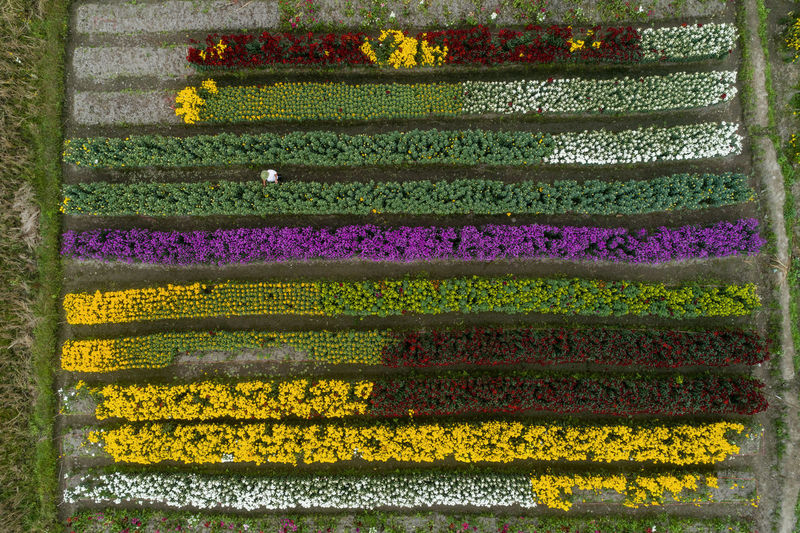 Flower Flowering Plant Growth Agriculture Agricultural Field No People Nature Green Color Drone  Ariel View