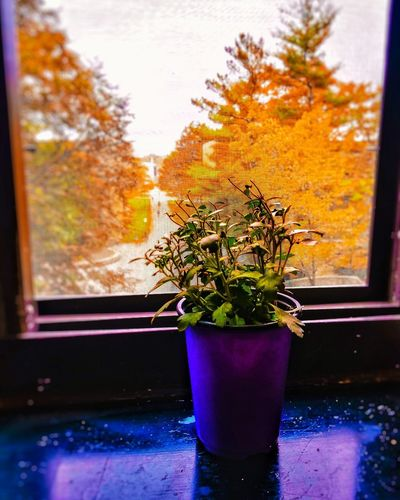 EyeEm Selects Window Nature Beauty In Nature EyeEmNewHere