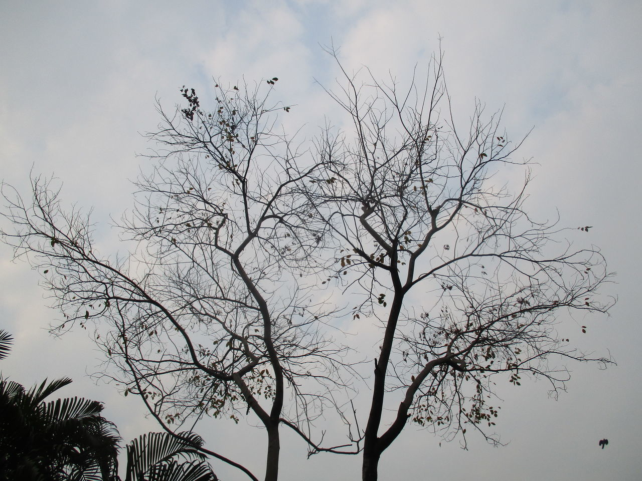 bare tree, tree, sky, nature, branch, bird, low angle view, outdoors, no people, beauty in nature, day, animal themes, animals in the wild, perching