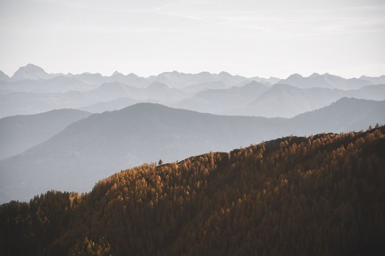 Colorful larch trees and layers of mountain ridges in the austrian alps in autumn.