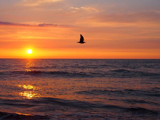 仕事終了ー明日から連休だ🎵 いつかの空 いつかの海 いつかの夕景 EyeEm Best Shots - Sunsets + Sunrise EyeEm Nature Lover EyeEm Best Shots - Nature EyeEm Best Shots Sunset Twilight Japan