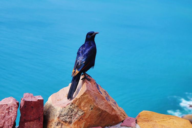 Close-up of bird perching on rock by sea