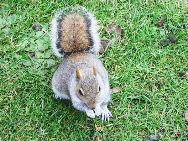 Small And Swift Nature Animals Squirrels Yudhvir