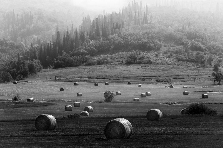 Misty Morning Fog Rolling Through the Pastoral Mountainside and Over a Field of Hay Bales. Hay Bale  Field Scenics - Nature Landscape Rural Scene Harvesting No People Farm Black And White Photography Pastoral Rolling Hills Tree Line Misty Fog Misty Morning Misty Landscape Misty Light Idyllic Nature Mountainside Heartland Travel Tranquility