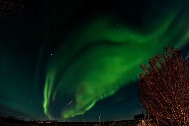 Low Angle View Of Aurora Borealis Against Sky At Night
