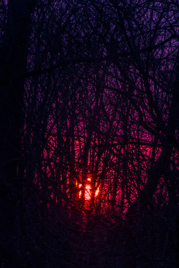 Christmas Eve Sunset Sunset Tree Nature Branch Tranquility Beauty In Nature Purple Light Glowing Color Bright Sunset Silhouettes Pink