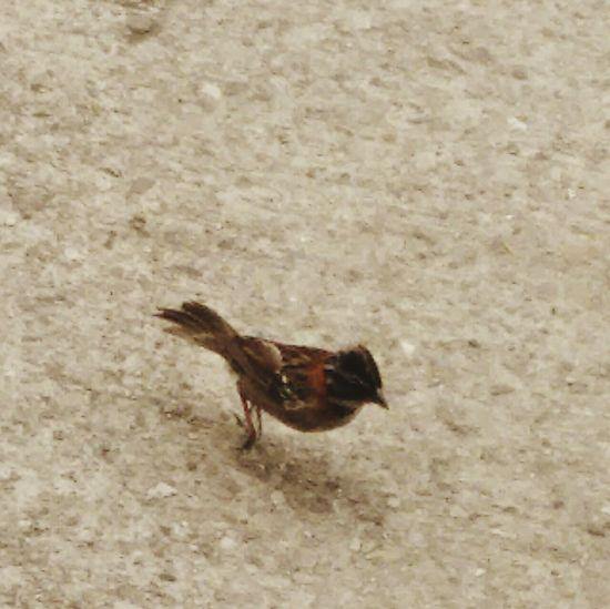 Pajaro Pajaros Aves 🐥🐤🐥 Ave Aves