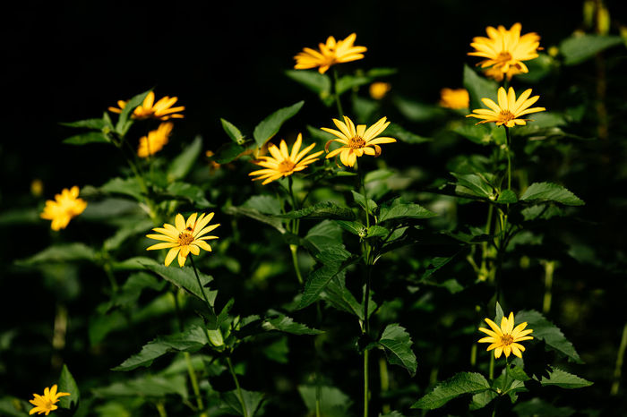 Yellow Flowers Flowers Garden Green Color Many Flowers Nature No People Outdoors Summer Flowers Yellow Flowers