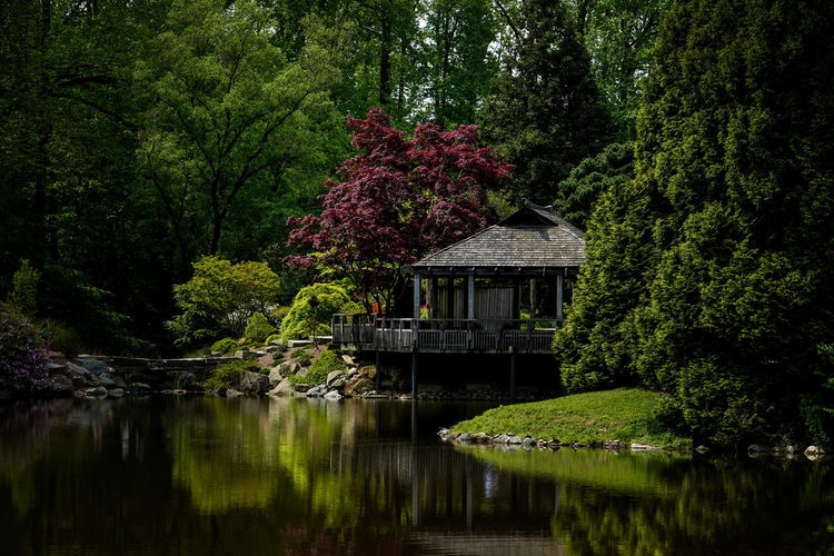 Lush scenery Plant Water Tree Nature Reflection Beauty In Nature Lake Built Structure No People Tranquility Architecture Flower Scenics - Nature Green Color Flowering Plant Waterfront Tranquil Scene Forest Pagoda Building Tea House Pond Rural Scene Lush Foliage