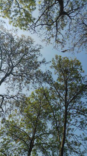 Turkey Istanbul Tree Beauty In Nature