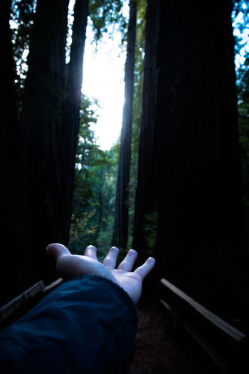 Adult Adults Only Day Forest Human Body Part Indoors  Leisure Activity Low Section Nature One Man Only One Person People Relaxation Tree WoodLand